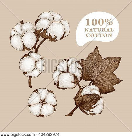 Set Of Different Branches And Cotton Flowers Isolated On A Beige Background. Hand Drawn Sketch. Flor