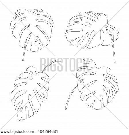 Monstera Leaves Set. Art Design Outline Monochrome Floral Illustration Art Design Elements Stock Vec