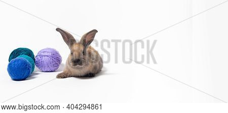 Beautiful Little Fluffy Rabbit Against The Background Of Soft Wool Yarn, Tangles And Threads Of Knit