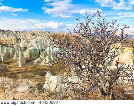 Dry Leafless Tree In The Foreground. View On Hills And Mountains In Cappadocia, Turkey. Limestone Fo