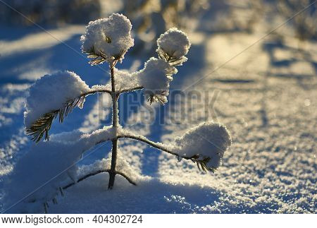 Beautiful Christmas Winter Snowy Landscape  Travel Wonderland