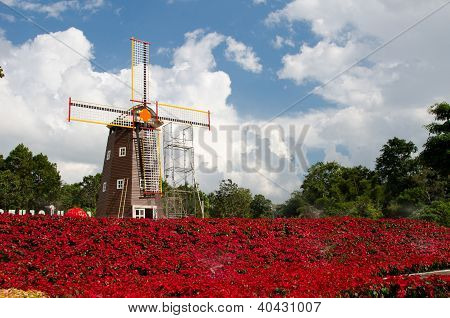 Poinsettia , Turbines on the terrace adorned with bright red flowers.