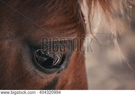 Brown Horse, Eyes Horse Close Up, Horse In Natural Background, Portrait Of Horse, Macro Shot Of A Ho
