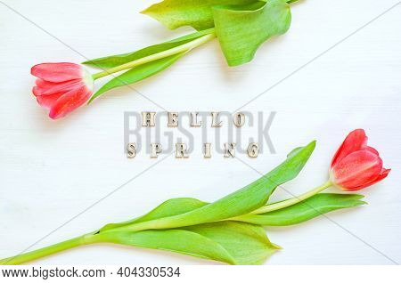 Spring background - spring composition made of red spring tulip flowers and wooden inscription Hello Spring on the white background. Spring background, flat lay, top view, space for text