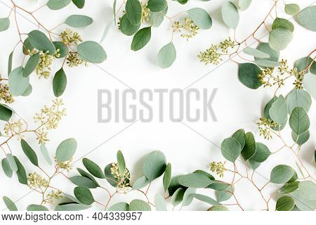 Frame Made Of Green Leaves, Branches Eucalyptus Populus With Fruits In The Form Of Berries On White