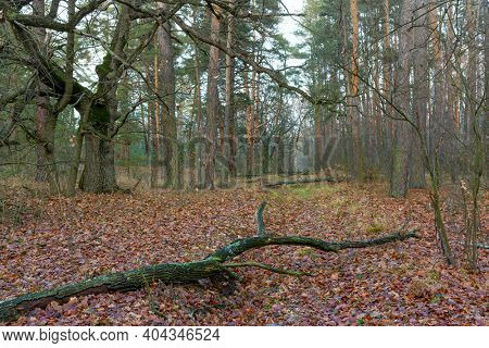 Autumn scene in deep forest