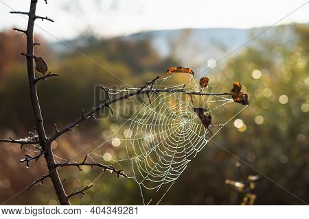 Spider Web In Dewdrops Close-up On A Blurry Background. An Autumn Leaf Fell On The Web. The Concept