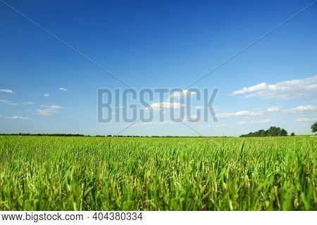 Picturesque View Of Beautiful Field With Grass On Sunny Day