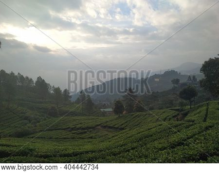Vacationing In The Mountains Looking At The Tea Garden Late In The Afternoon