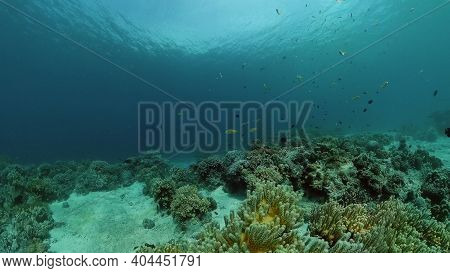 Tropical Sea And Coral Reef. Underwater Fish And Coral Garden. Underwater Sea Fish. Tropical Reef Ma