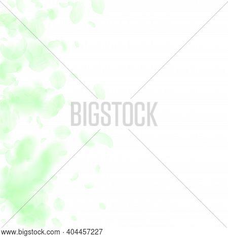 Green Flower Petals Falling Down. Quaint Romantic Flowers Gradient. Flying Petal On White Square Bac