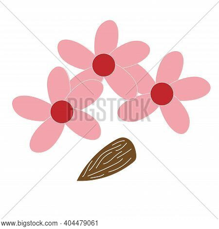 Almond Flowers And Almond Vector Flat Illustration