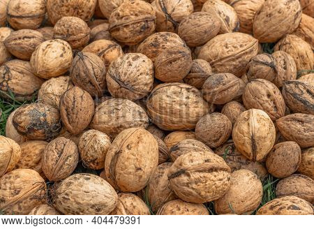 Whole Walnuts Top View. Fresh Raw Walnuts Full Of Healthy Fats, Fiber, Vitamins And Minerals.eating