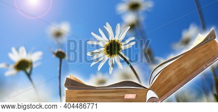 World Book Day. Open Book On Sunny Field With Flowers Background. Book Is Power, Source Of Knowledge