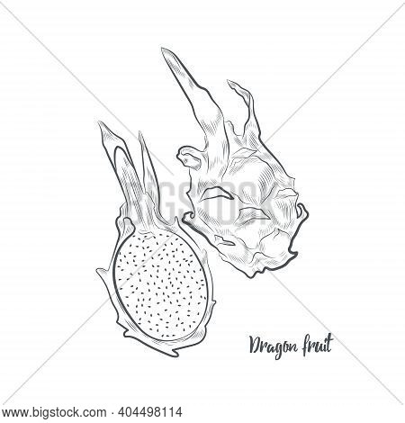 Dragon Fruit Sketch Vector Illustration. Hand Drawn Pitaya Isolated On White Background.