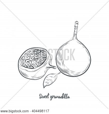 Sweet Granadilla Fruit Sketch Vector Illustration. Hand Drawn Passiflora Fruit Isolated On White Bac