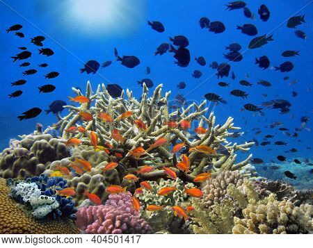 Colorful Tropical Reef With Sun In The Blue Ocean. Underwater Photography From Snorkeling On The Cor