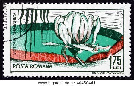 Postage stamp Romania 1965 Victoria Amazonica, Flowering Plant