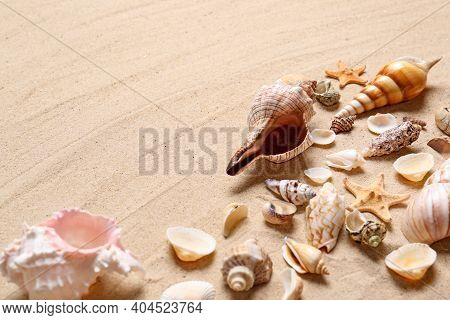 Beautiful Seashells And Starfishes On Beach Sand, Space For Text. Summer Vacation