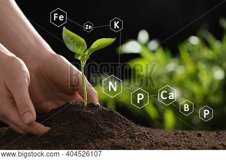 Mineral Fertilizer. Woman Planting Young Seedling Into Soil, Closeup
