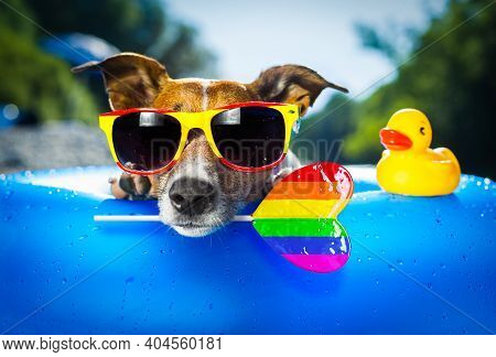 Jack Russell Dog On  Blue Air Mattress In Gay Pride In Summer Vacation At The Beach Or River   In Wa
