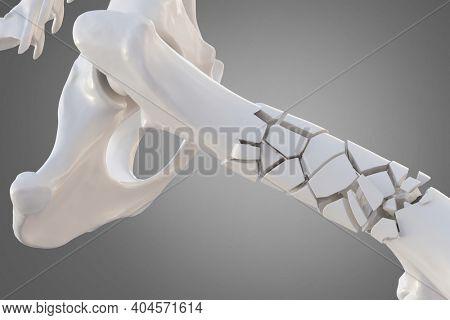 Broken dog femur bone with visible other bones. Canine skeleton 3d illustration