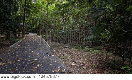A Walking Track Amongst Bushland With Fallen Leaves