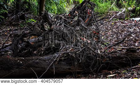 A Felled Tree Trunk Rotting In The Bush