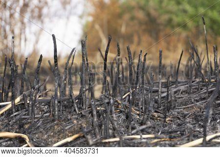 Burnt Straw Inferno Page Grunge Blaze Blazing