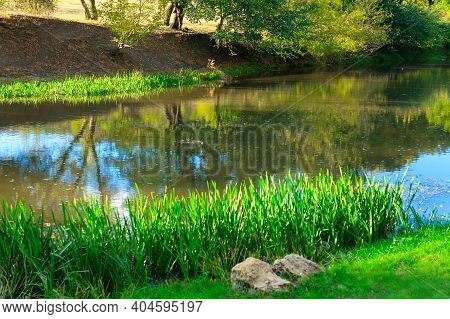 Mirror Of Trees On Water Surface At Riverside . Shadow At The Green River Bank