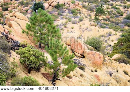 Alpine Meadow Covered With Rocks And Pine Trees Taken On Rural Badlands In The Rural Southern Califo