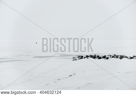 Icy Winter At Frozen River. Winter Romantic, Silence And Wild Nature, Icy And Snowy Landscape, Conce