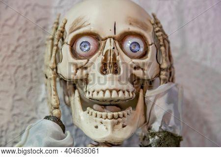 Exhibit Of The Museum Of Skulls And Skeletons In Zelenogradsk, Russia