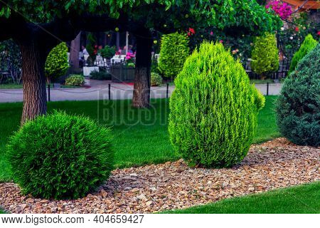 Landscaping Of A Backyard Garden With Evergreen Conifers And Thuja Mulched By Yellow Stone In A Spri