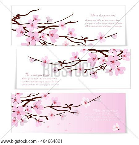 Three Banners With Fresh Pink Ornamental Sakura Flowers  Or Cherry Blossom  Symbolic Of Spring On Lo