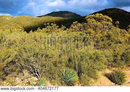 Chaparral Shrubs Including Yucca Plants On The Rural High Desert Plateau Taken At Arid Badlands In T