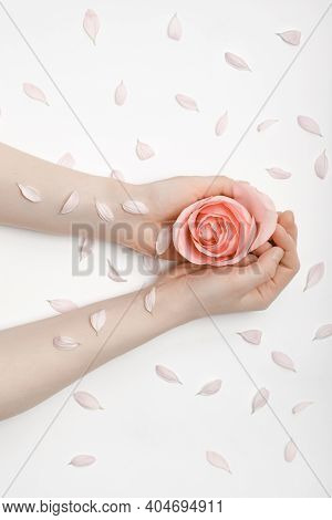 Beautiful Hands Of A Woman Holding A Delicate Rose Bud In Her Hands, Lying On A White Background. Th