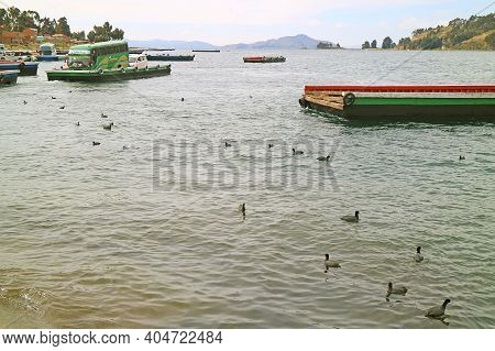 Traffic And Transportation On Lake Titicaca With Flock Of Andean Coot Birds, Bolivia, South America