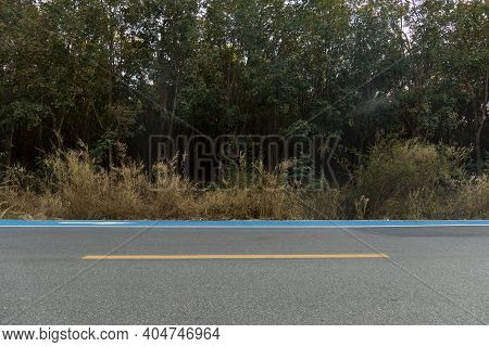 The Horizontal Road With Grassy Pastures And Rubber Forest. Blue Bike Lane On An Asphalt Road. Path