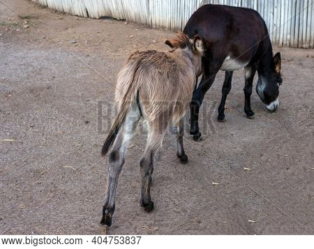 Animal Life, The Donkey Is Friends With The Horse, The Donkey Licks The Horse.