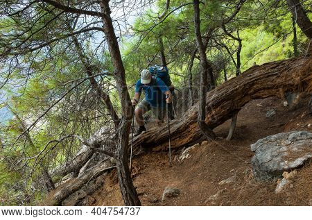 Hiking on Lycian way. Man with backpack climbs over large trunk of fallen old tree in coniferous forest on Lycian Way trail, trekking in Turkey