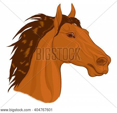 Portrait Of A Chestnut Horse With Long Mane. Stallion Pricked Up Its Ears And Stared Ahead Warily Wi