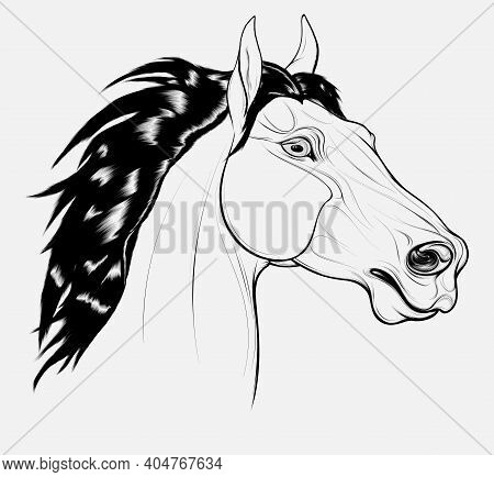 Linear Portrait Of A Horse With Long Mane. Stallion Pricked Up Its Ears And Stared Ahead Warily With