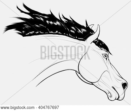 Outline Portrait Of A Running Horse With Long Fluttering Mane. Stallion Lowered Its Head. Vector Cli