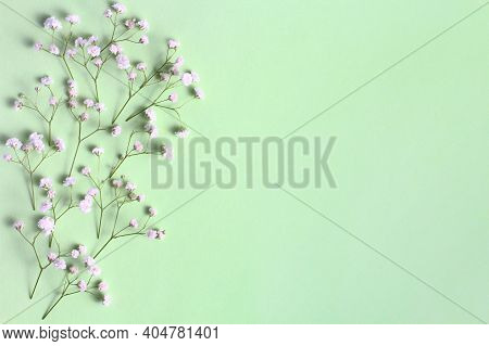 Floral Composition. Frame From Branches And Buds Of Gypsophila Flowers On A Green Pastel Background.