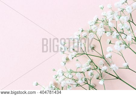 Floral Spring Composition. Frame From Branches And Buds Of Gypsophila Flowers On A Pink Pastel Backg