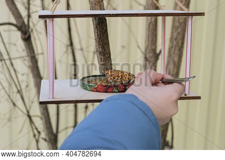 Child Hand With Spoon Adds Grain To The Bird Feeder For Wintering Birds