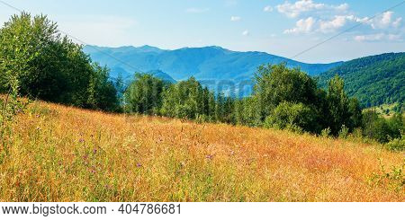 Rural Field In Mountains. Beautiful Summer Landscape Of Carpathian Countryside. Trees On The Hill, F