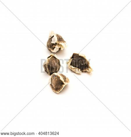 Four Moringa Or Drumstick, Benzolive Seeds Isolated On White Background