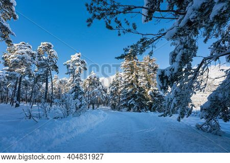 Snow Covered Walking Path Through Sunny Evergreen Forest In Alpine Winter Landscape, Wildermieming,